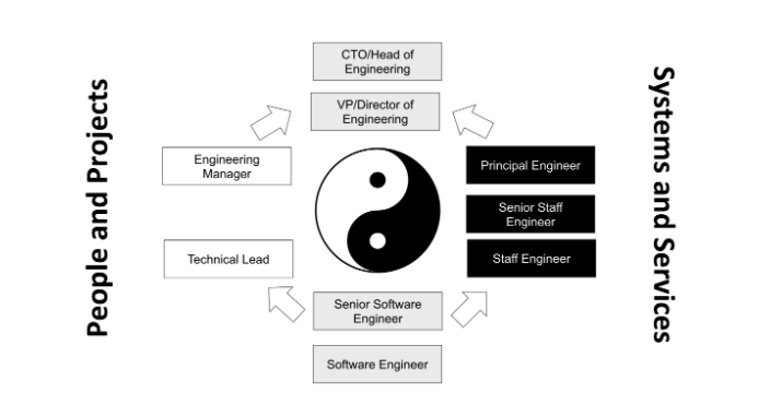 the career path of a software developer